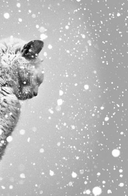 chat-neige
